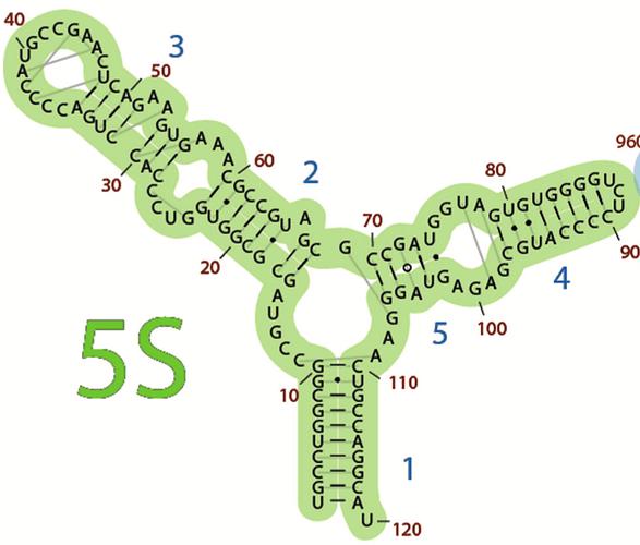 5S bonds